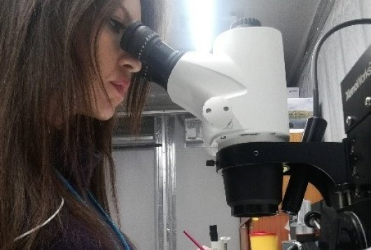Panagiota Koskinioti working on olive fruit fly